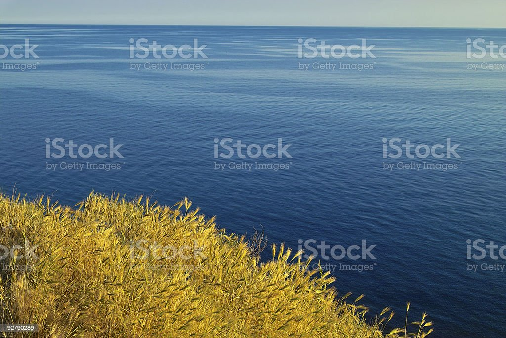 Wheat and sea stock photo