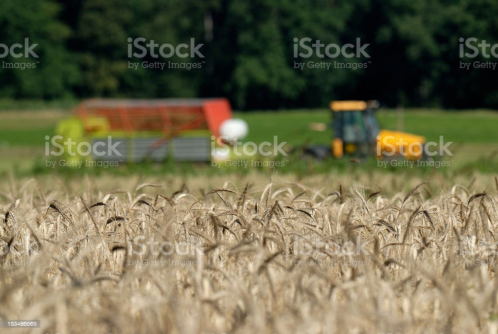 wheat and the machine royalty-free stock photo