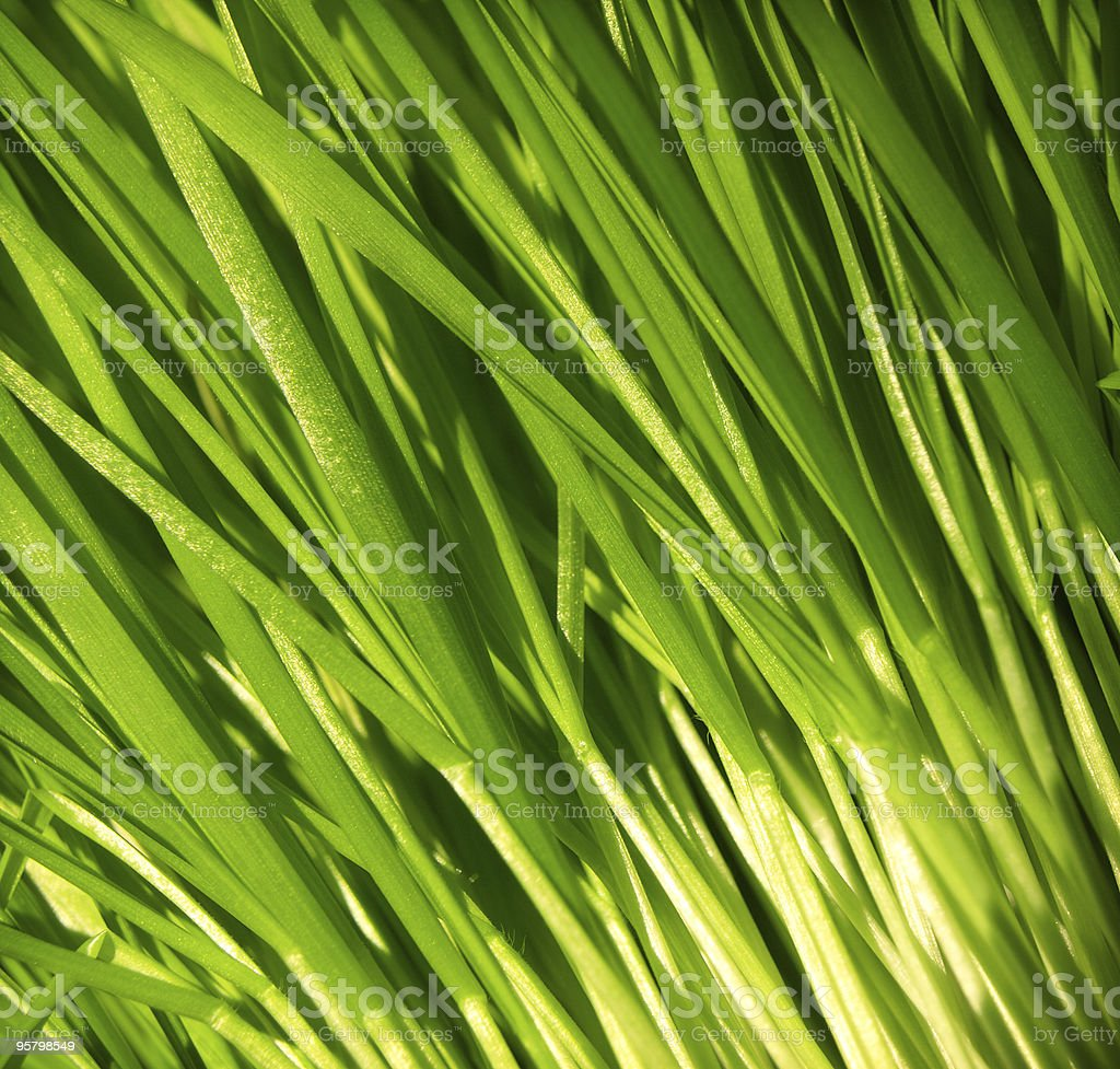 wheat backround royalty-free stock photo