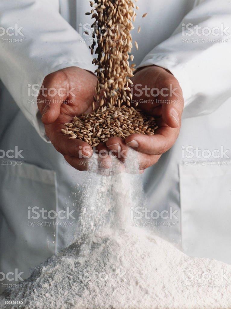 wheat becomes flour stock photo
