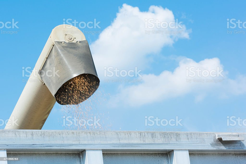 Wheat Being Pumped from Combine Unloading Auger stock photo