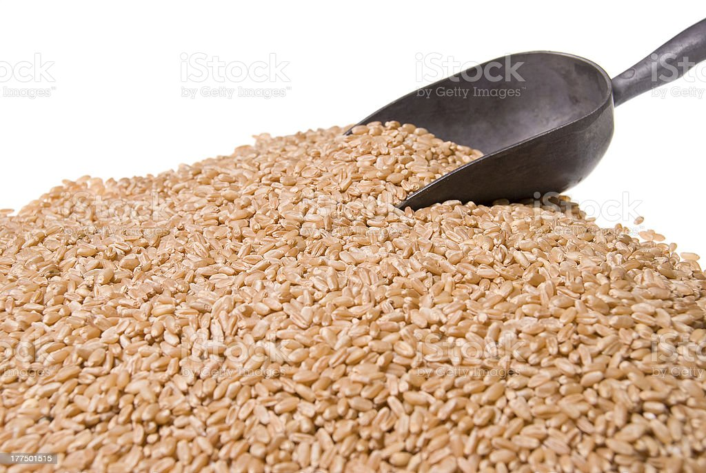 Wheat Berries royalty-free stock photo