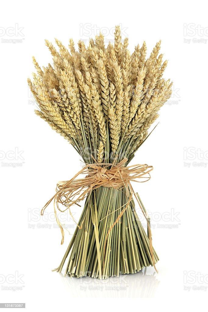 Wheat Bundle royalty-free stock photo