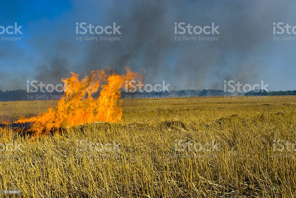 wheat burns stock photo