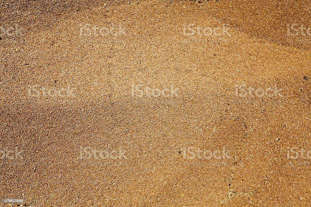 wheat crop , harvest stock photo