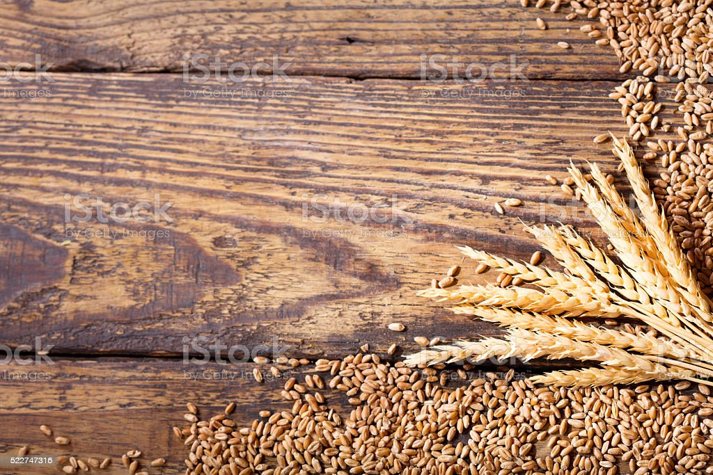wheat ears and grains stock photo