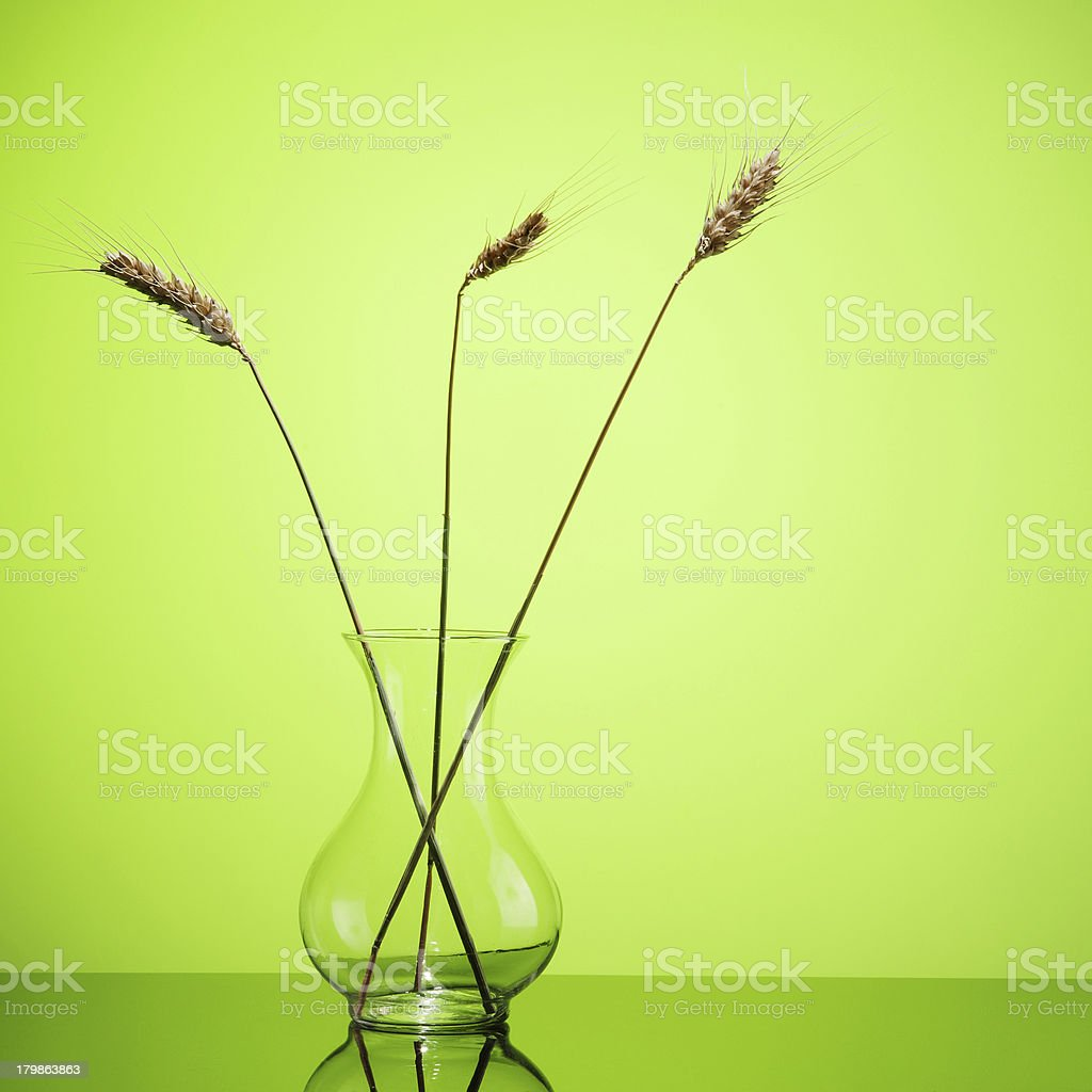 Wheat ears in glass vase royalty-free stock photo