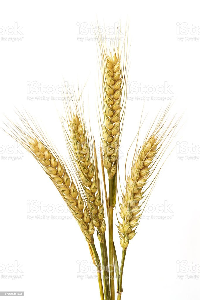Wheat ears stock photo