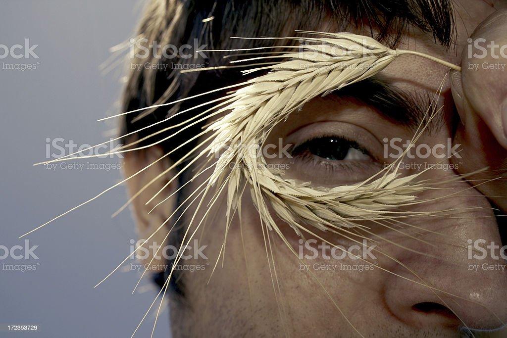 Wheat Eyes stock photo