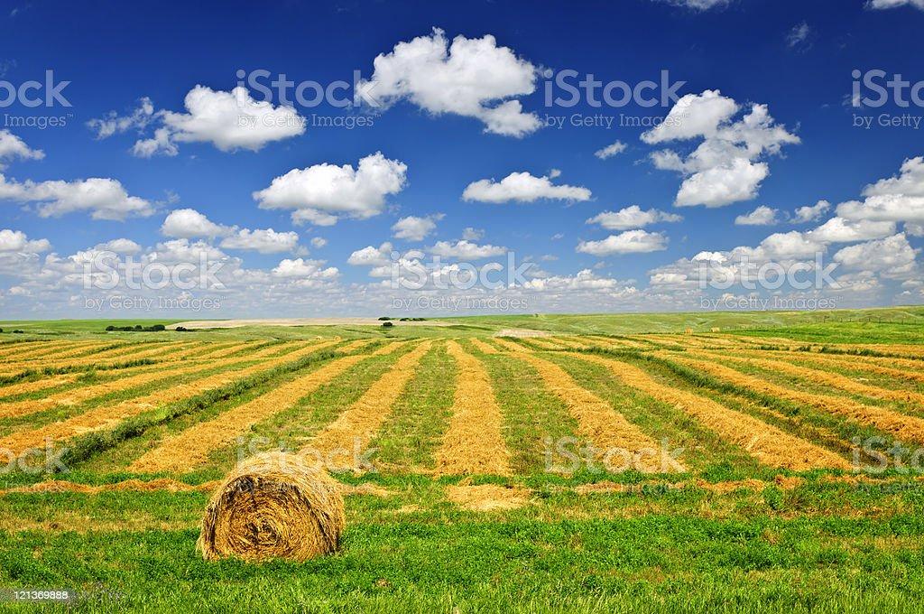 Wheat farm field at harvest stock photo