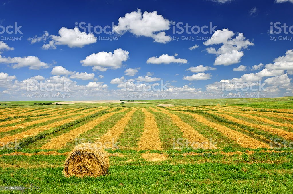 Wheat farm field at harvest stock photo