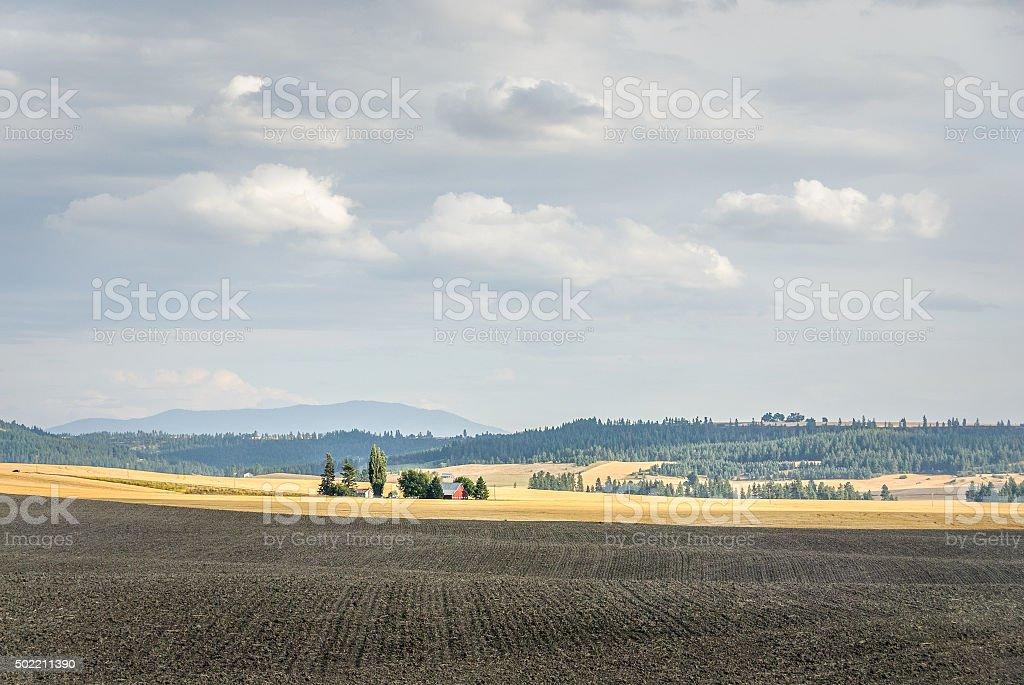 Wheat Farm In the Sunlight stock photo