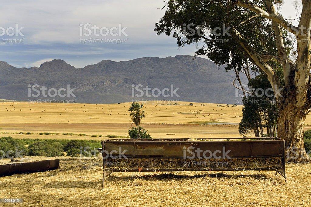 Wheat farm near Ceres, South Africa stock photo