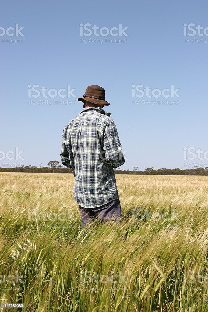 Wheat Farmer stock photo