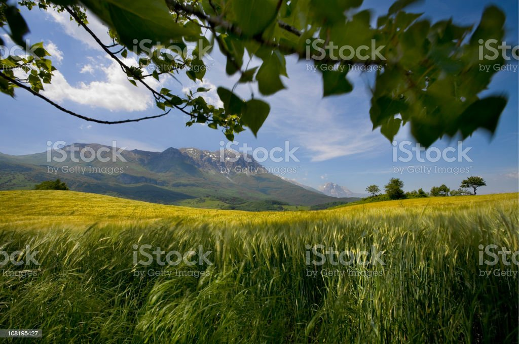 wheat field among the mountains royalty-free stock photo