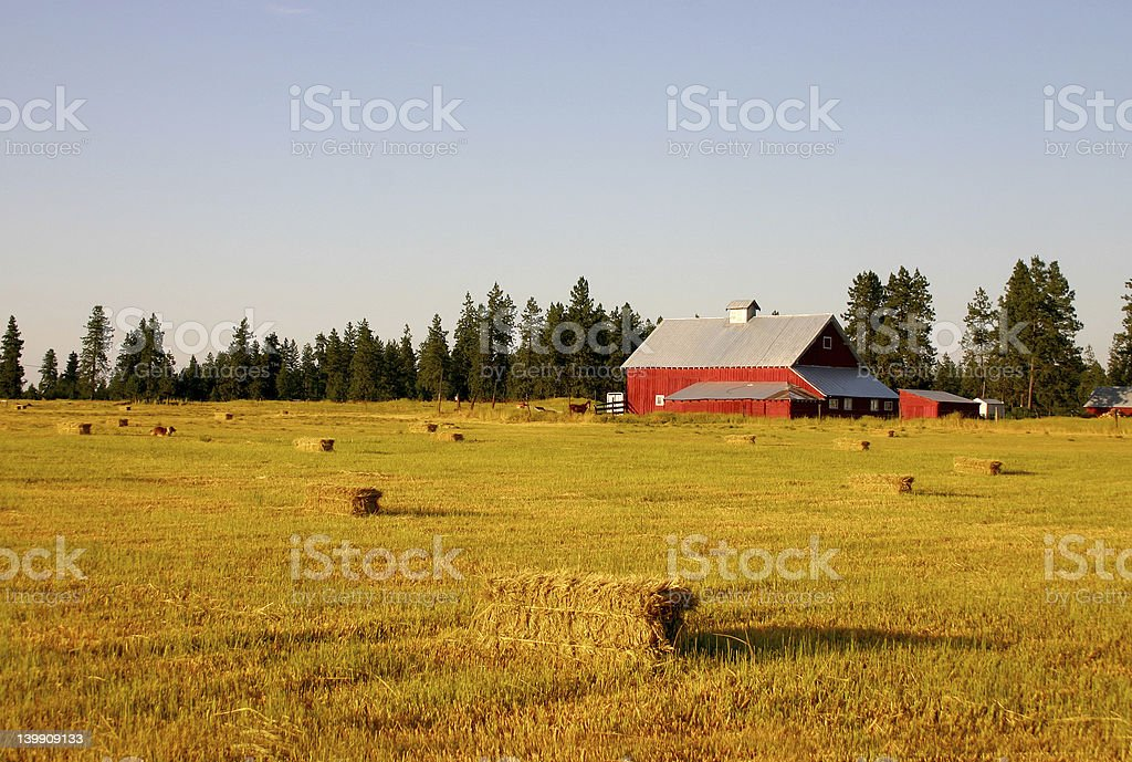 Wheat Field and Barn royalty-free stock photo