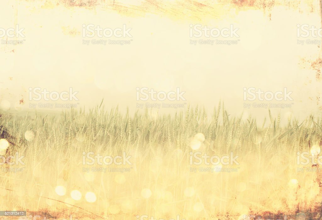 wheat field and bokeh lights stock photo