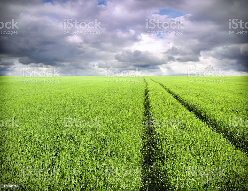 wheat field and clouds royalty-free stock photo