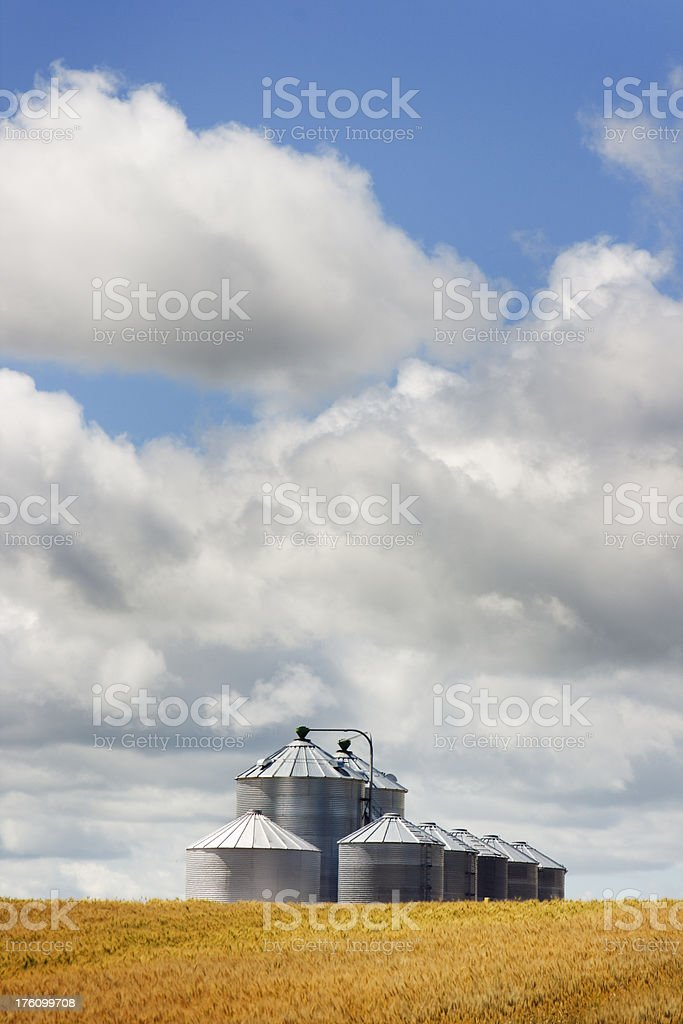 Wheat Field and Grain Silos Vt stock photo