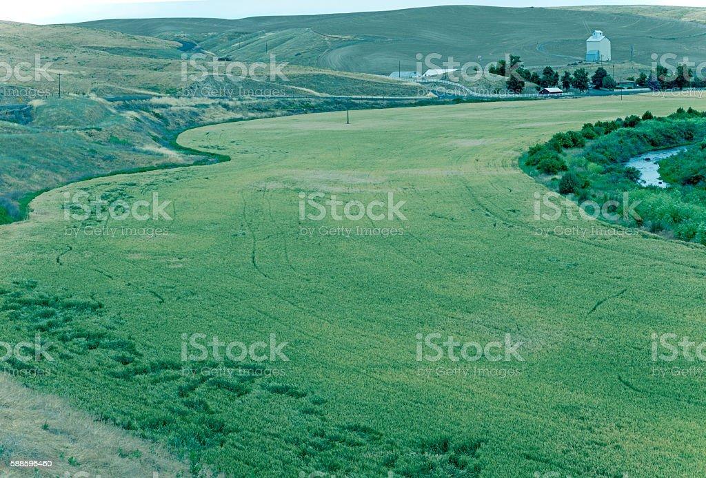 Wheat field and stream north of Walla Walla WA stock photo