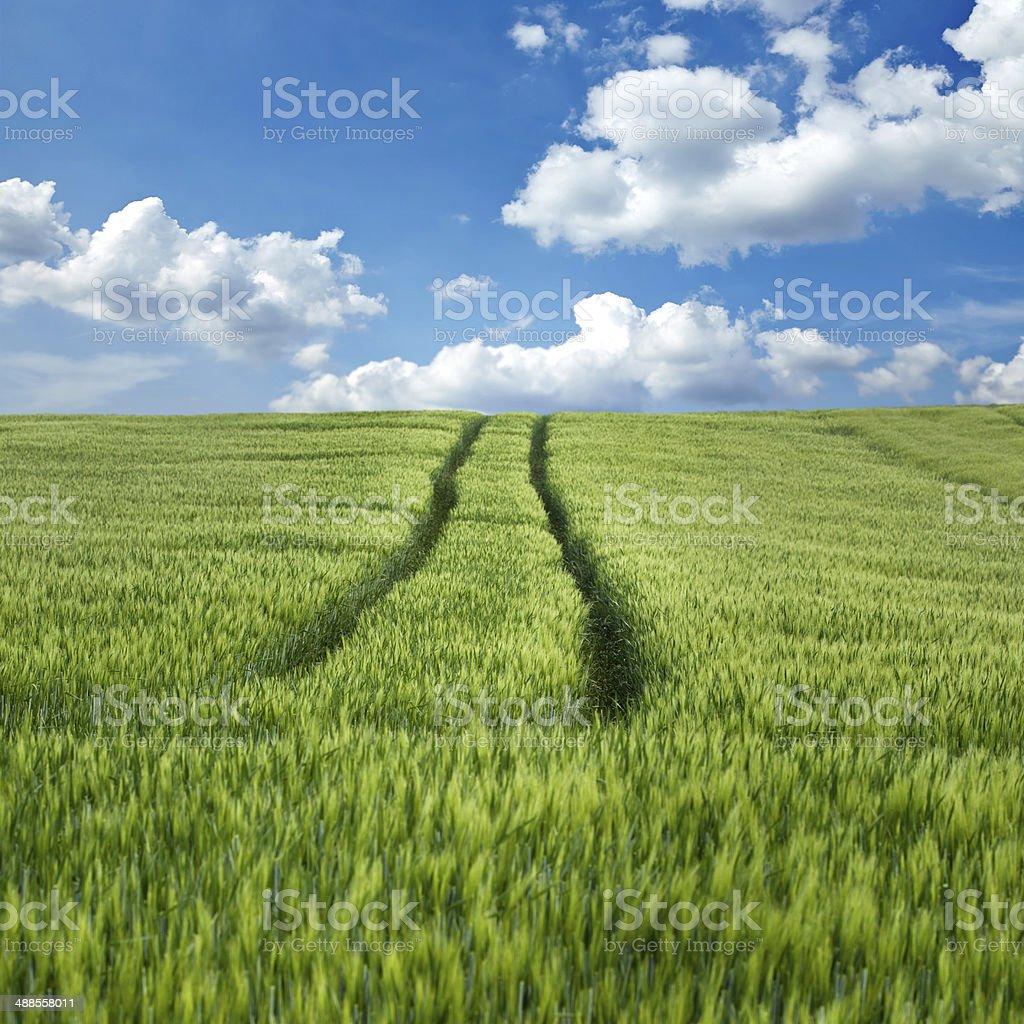 Wheat field and tracks royalty-free stock photo