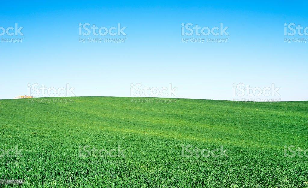 wheat field at Alentejo region,Portugal stock photo
