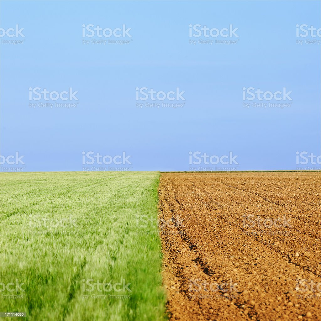 Wheat field composition stock photo