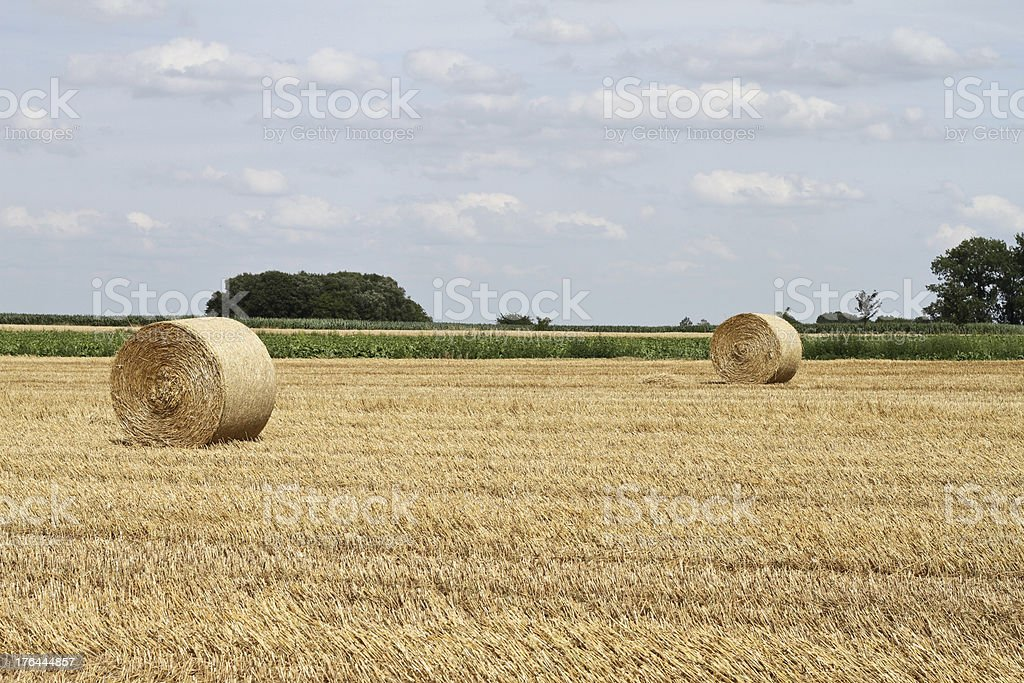 Wheat field crop HayStacks royalty-free stock photo