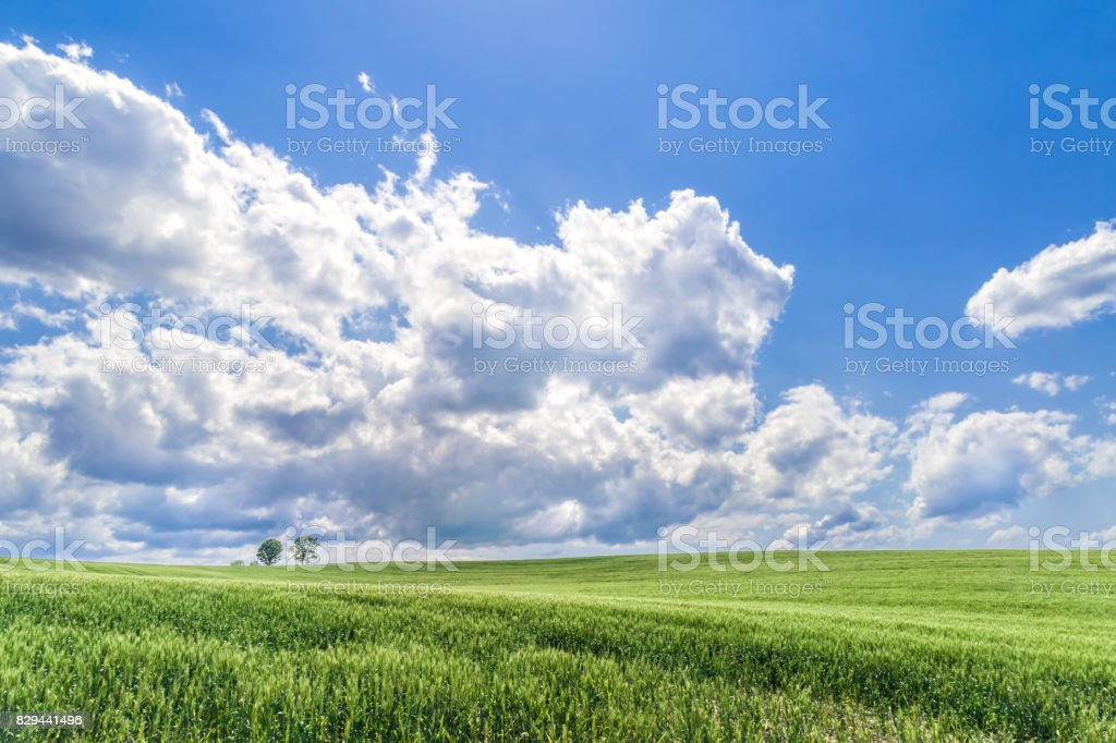 Wheat field hill and  Parent Child Tree stock photo