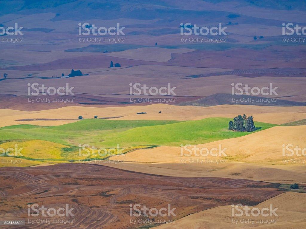 wheat field in autumn, Palouse, WA, USA stock photo