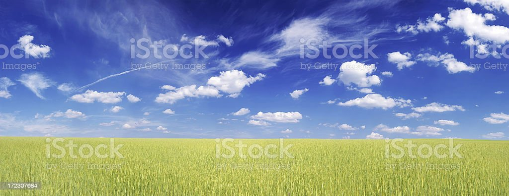 Wheat field Landscape royalty-free stock photo