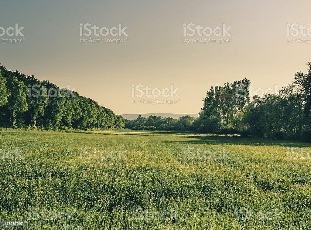 Wheat field Lower Saxony (Weizenfeld in Niedersachsen) royalty-free stock photo
