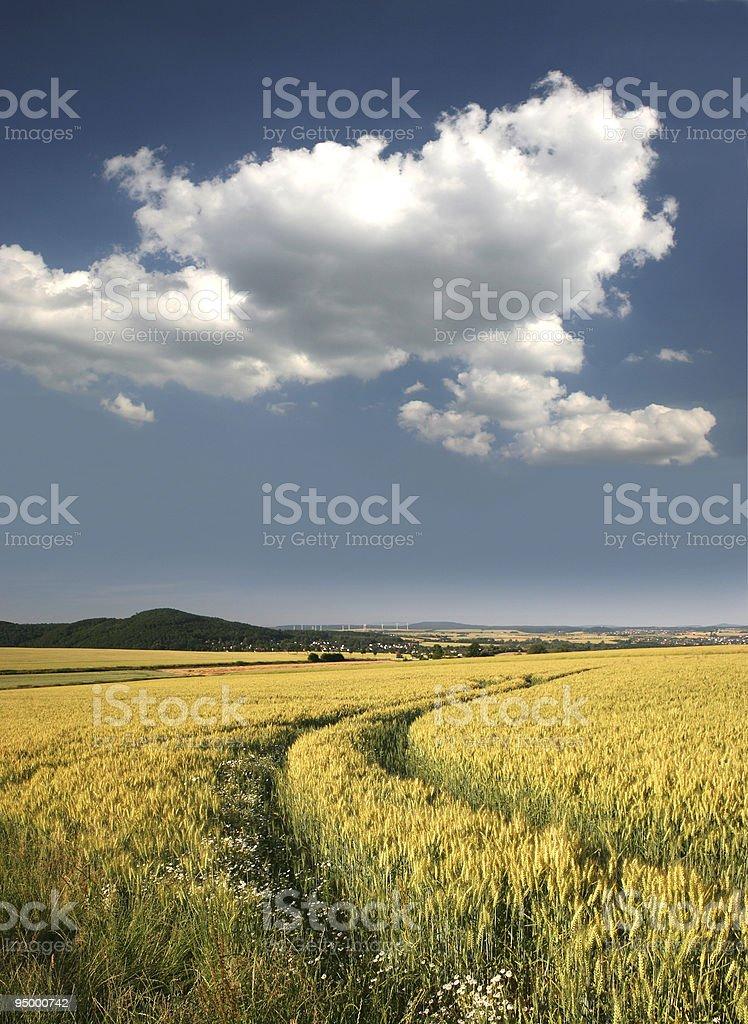 Wheat field near Kassel royalty-free stock photo
