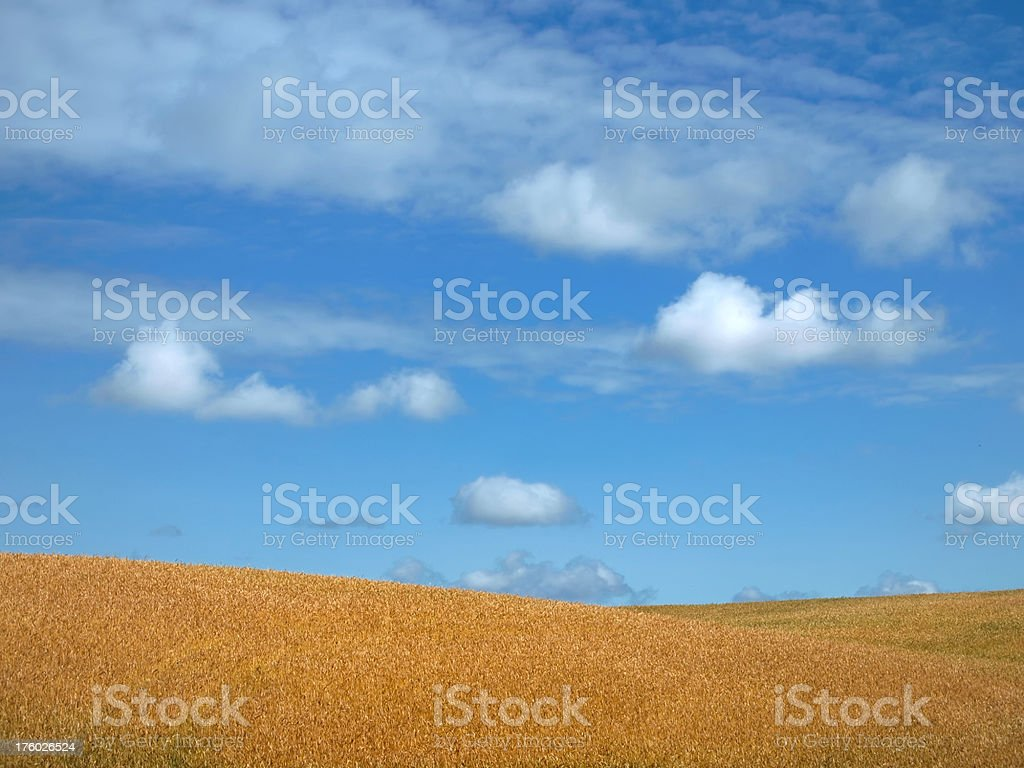 Wheat Field of Dreams royalty-free stock photo