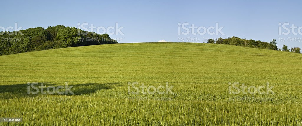 Wheat field on a summer evening stock photo