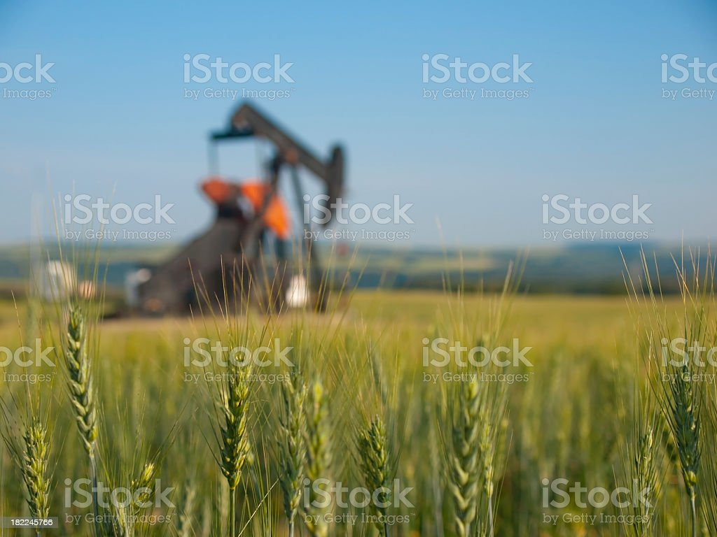 Wheat field with an oil pump pump jack in the background royalty-free stock photo