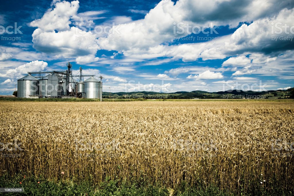 Wheat Field with Grain Storage in Background stock photo