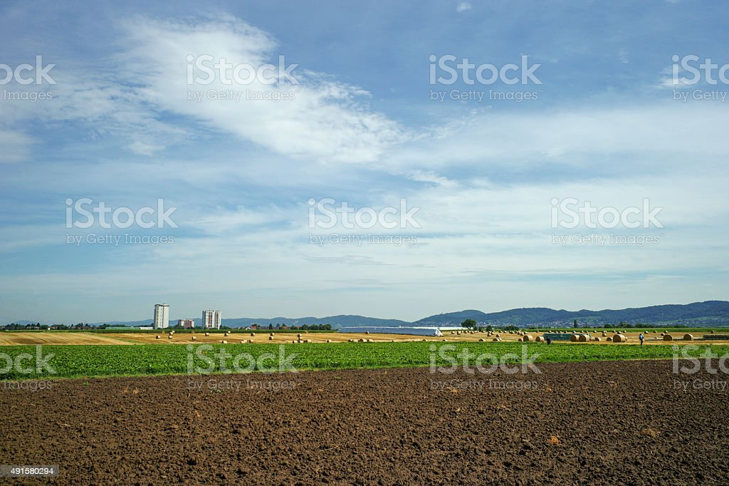 wheat field with hay rolles near heidelberg germany stock photo