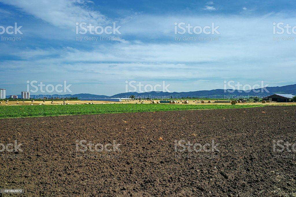 wheat field with hay rolles near karlsruhe germany stock photo