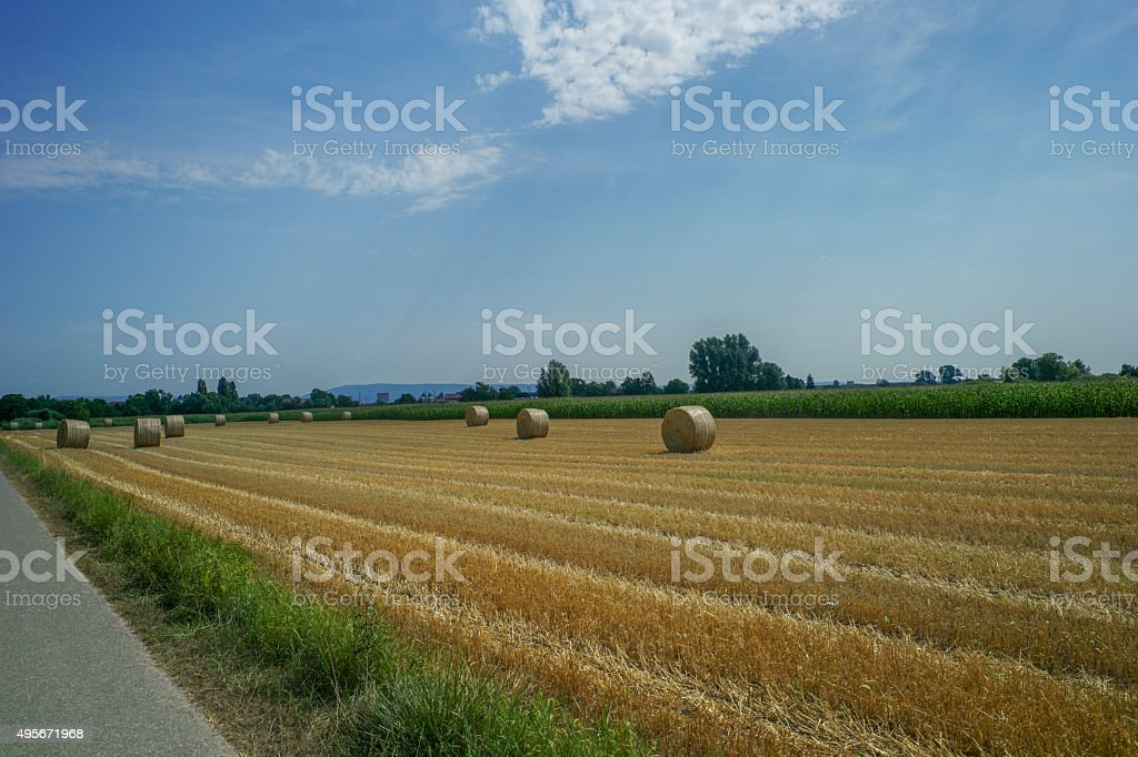 wheat field with hay rolles near speyer germany stock photo