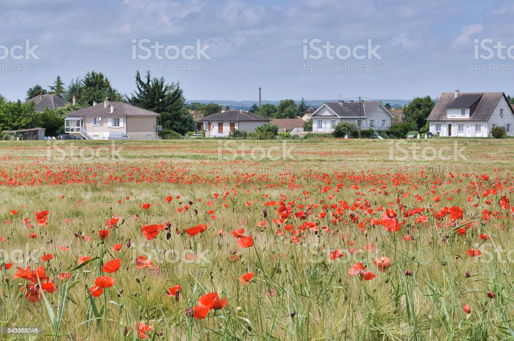 Wheat field with poppies in Chatellerault city, France royalty-free stock photo