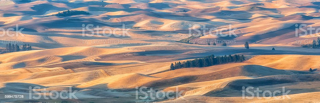 Wheat fields at dawn stock photo