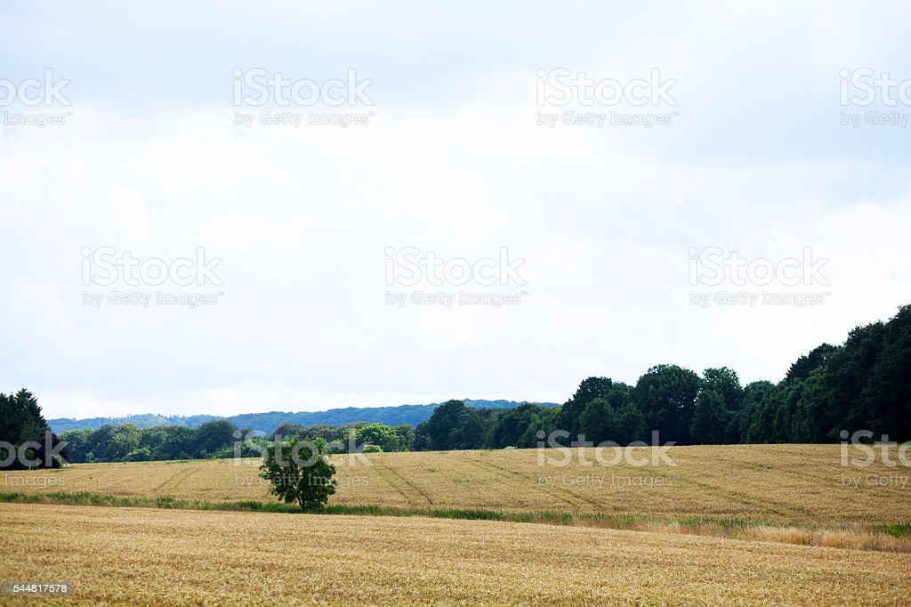 Wheat fields in valley Ruhr stock photo