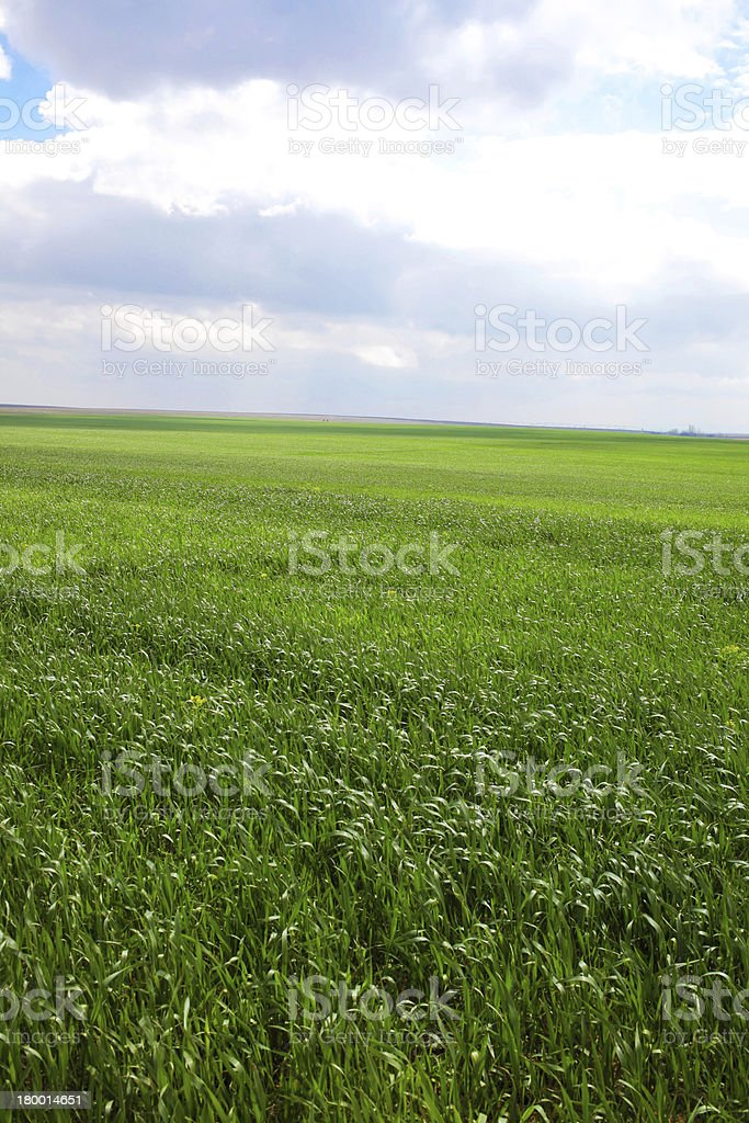 wheat garden royalty-free stock photo
