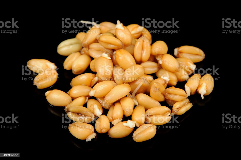 Wheat Germs on Black Background stock photo