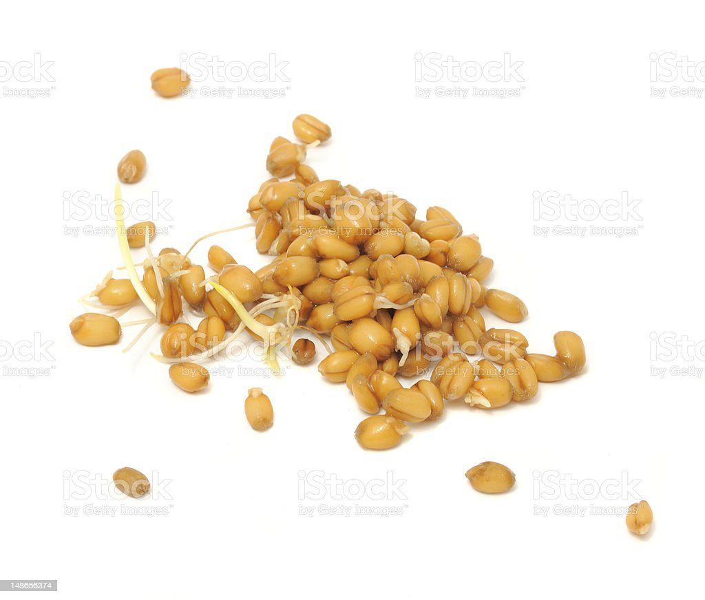 Wheat Germs stock photo