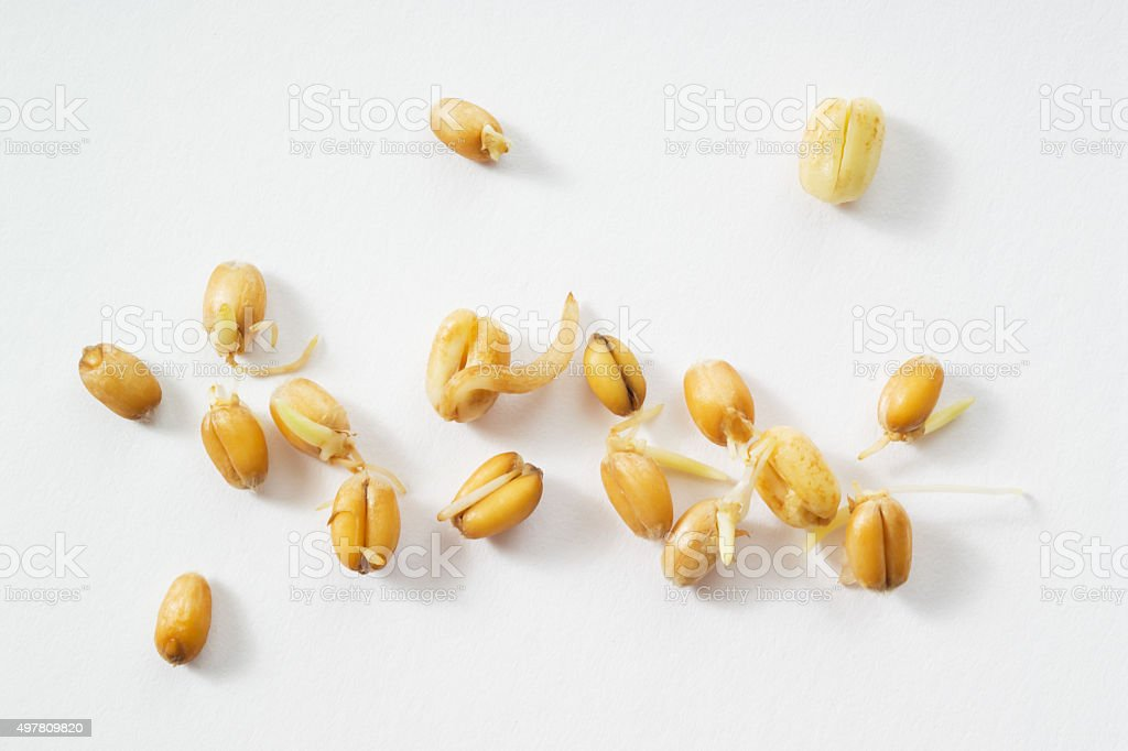 Wheat germs, sprouts, white background stock photo