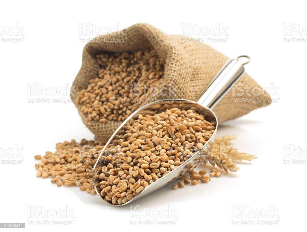 wheat grain in scoop on white stock photo
