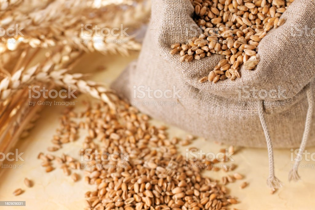 Wheat grain in the bag stock photo