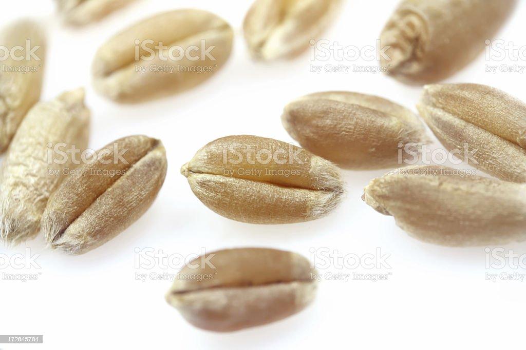 Wheat grain on a white background. stock photo